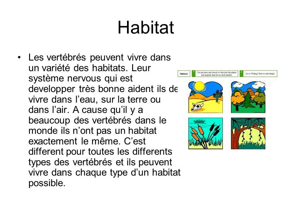 Habitat Les vertébrés peuvent vivre dans un variété des habitats.