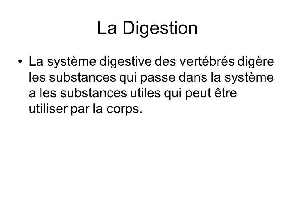 La Digestion La système digestive des vertébrés digère les substances qui passe dans la système a les substances utiles qui peut être utiliser par la corps.