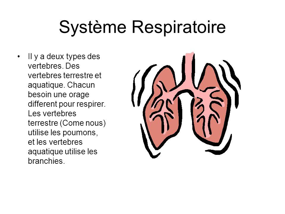 Système Respiratoire Il y a deux types des vertebres.