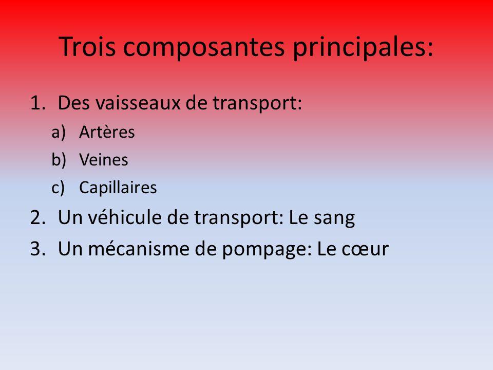 Trois composantes principales: 1.Des vaisseaux de transport: a)Artères b)Veines c)Capillaires 2.Un véhicule de transport: Le sang 3.Un mécanisme de po