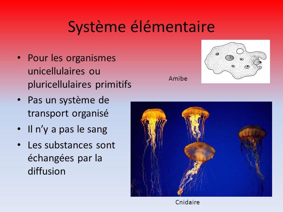 Système élémentaire Pour les organismes unicellulaires ou pluricellulaires primitifs Pas un système de transport organisé Il ny a pas le sang Les subs