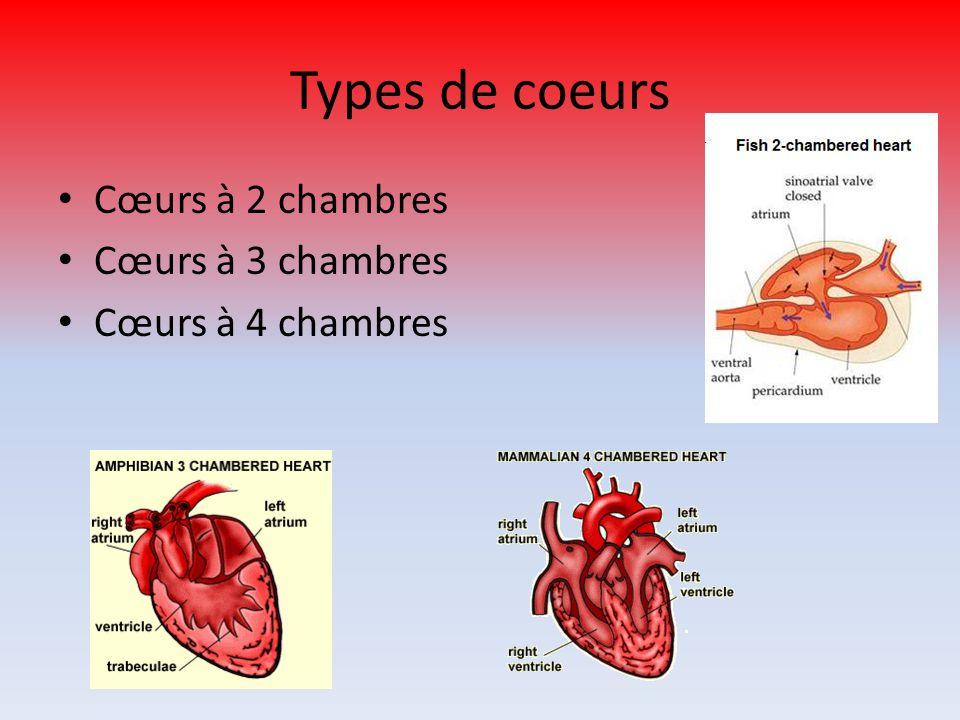Types de coeurs Cœurs à 2 chambres Cœurs à 3 chambres Cœurs à 4 chambres