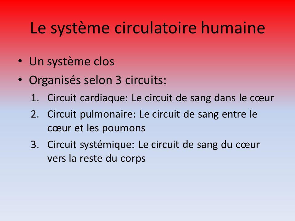 Le système circulatoire humaine Un système clos Organisés selon 3 circuits: 1.Circuit cardiaque: Le circuit de sang dans le cœur 2.Circuit pulmonaire: