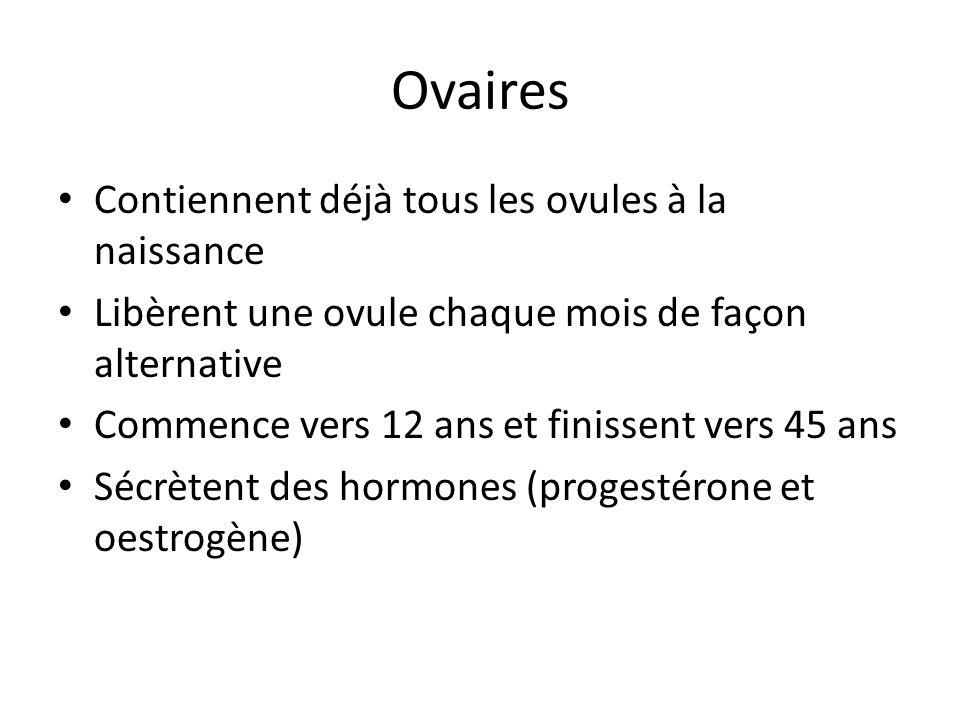 Ovaires Contiennent déjà tous les ovules à la naissance Libèrent une ovule chaque mois de façon alternative Commence vers 12 ans et finissent vers 45