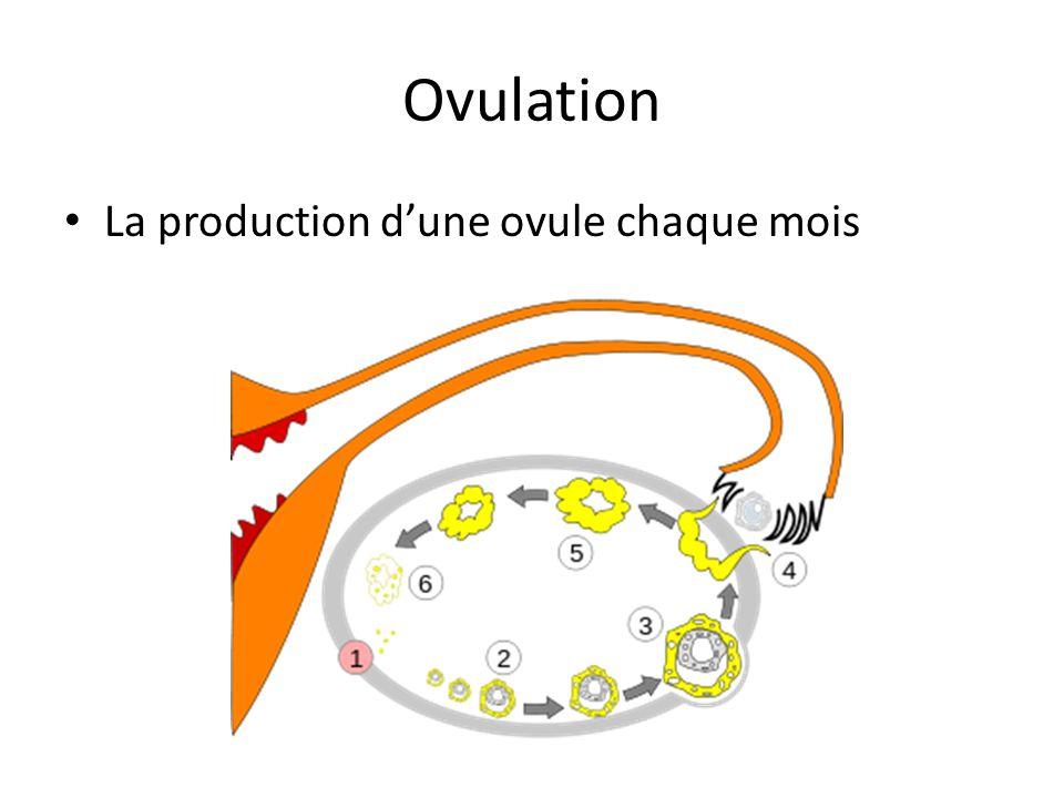 Ovulation La production dune ovule chaque mois