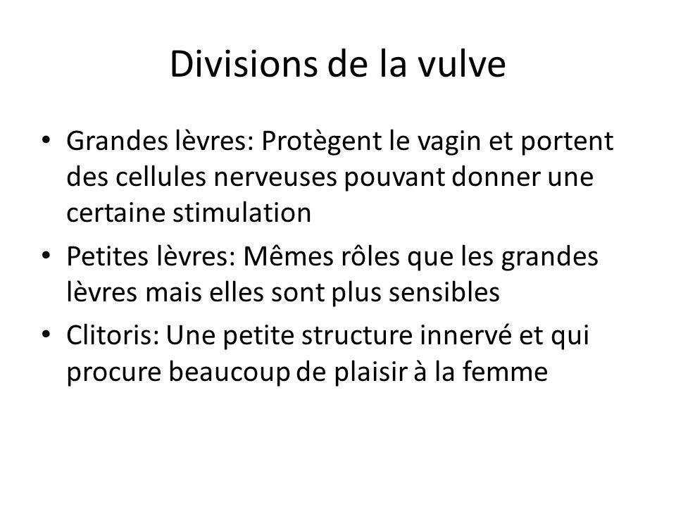 Divisions de la vulve Grandes lèvres: Protègent le vagin et portent des cellules nerveuses pouvant donner une certaine stimulation Petites lèvres: Mêm