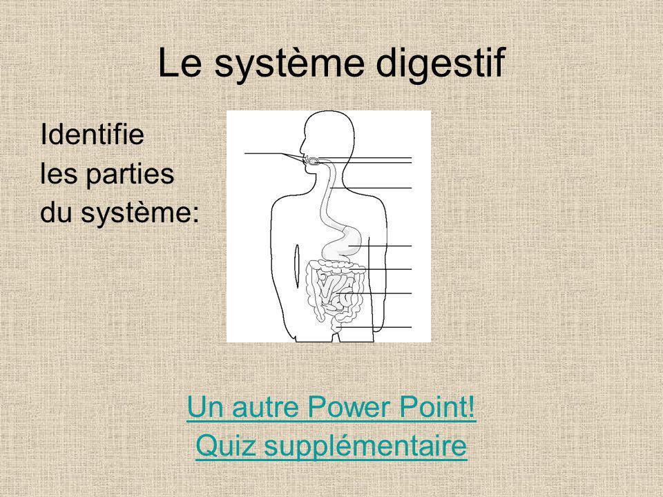 Le système digestif Identifie les parties du système: Un autre Power Point! Quiz supplémentaire