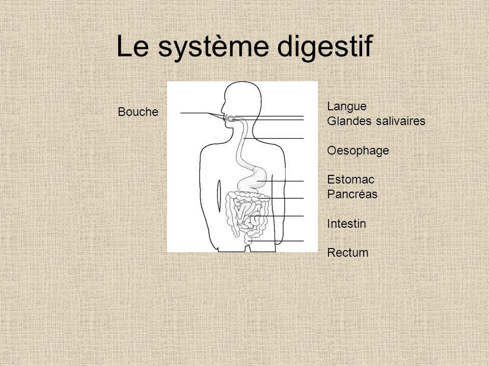 Le système digestif Langue Glandes salivaires Oesophage Estomac Pancréas Intestin Rectum Bouche