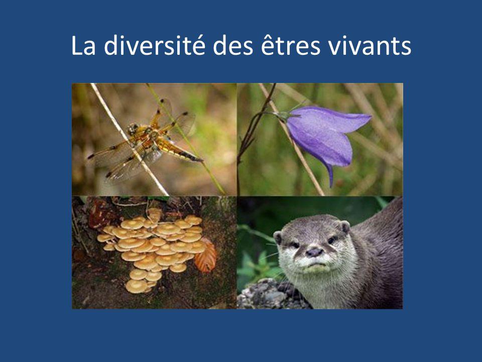 La classification des organismes Il y a trop dorganismes dans le monde.