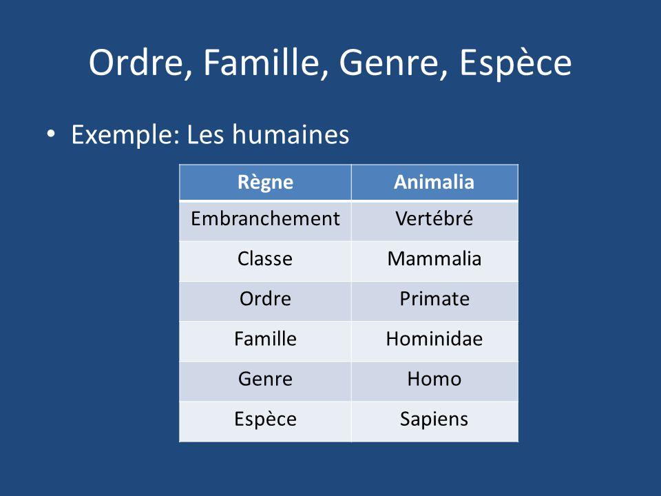 Ordre, Famille, Genre, Espèce Exemple: Les humaines RègneAnimalia EmbranchementVertébré ClasseMammalia OrdrePrimate FamilleHominidae GenreHomo EspèceS