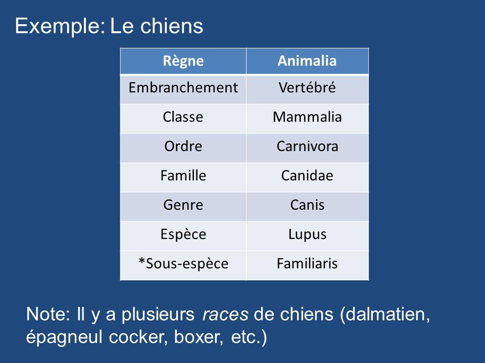 Exemple: Le chiens RègneAnimalia EmbranchementVertébré ClasseMammalia OrdreCarnivora FamilleCanidae GenreCanis EspèceLupus *Sous-espèceFamiliaris Note
