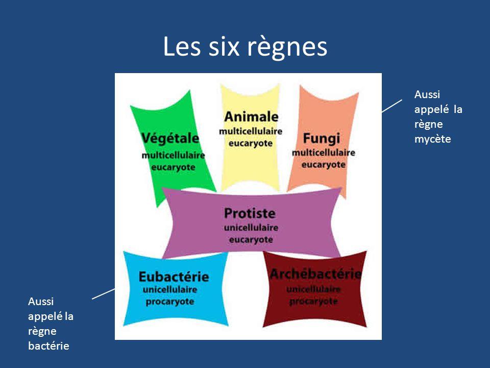 Les six règnes Aussi appelé la règne mycète Aussi appelé la règne bactérie