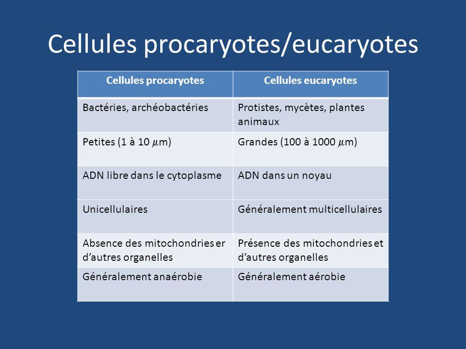 Cellule procaryoteCellules eucaryotes
