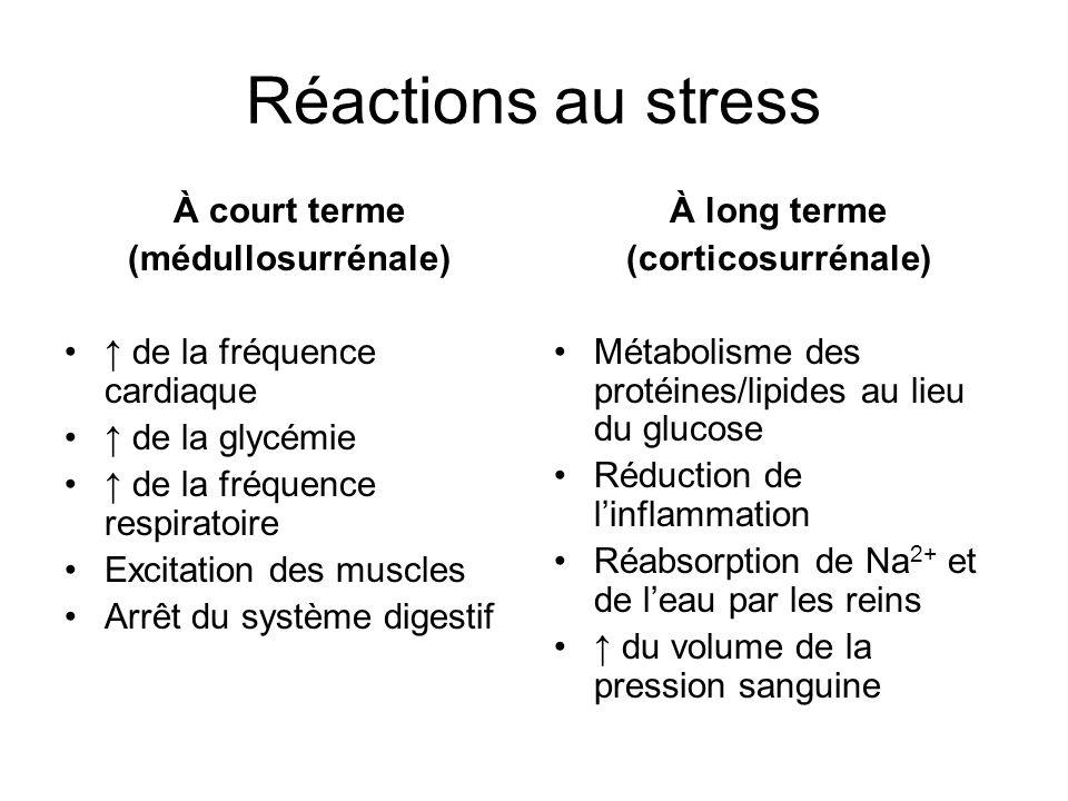 Réactions au stress À court terme (médullosurrénale) de la fréquence cardiaque de la glycémie de la fréquence respiratoire Excitation des muscles Arrêt du système digestif À long terme (corticosurrénale) Métabolisme des protéines/lipides au lieu du glucose Réduction de linflammation Réabsorption de Na 2+ et de leau par les reins du volume de la pression sanguine