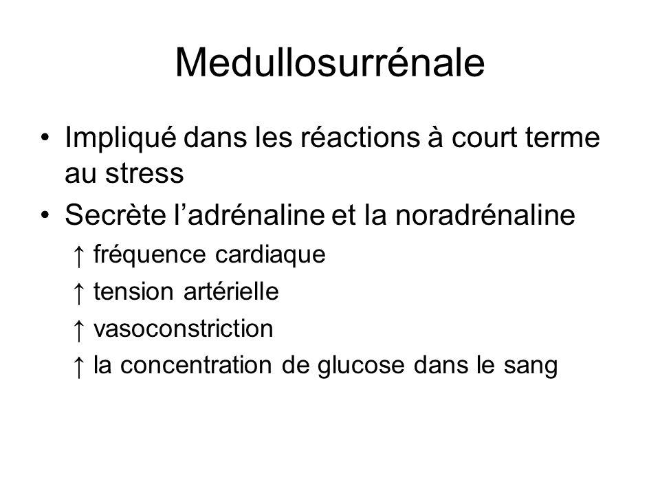 Medullosurrénale Impliqué dans les réactions à court terme au stress Secrète ladrénaline et la noradrénaline fréquence cardiaque tension artérielle vasoconstriction la concentration de glucose dans le sang