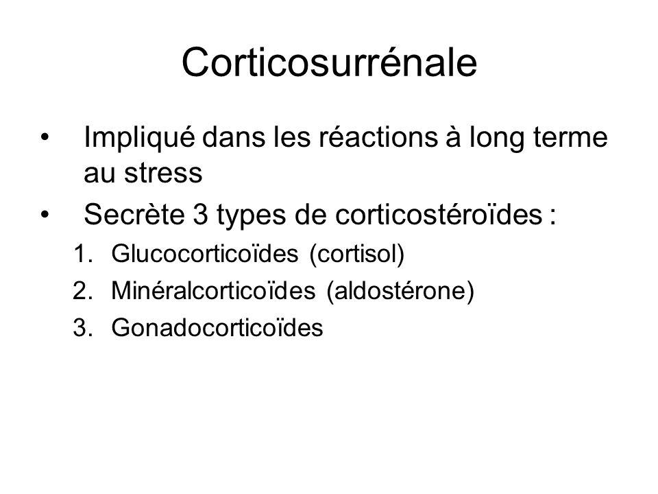 Corticosurrénale Impliqué dans les réactions à long terme au stress Secrète 3 types de corticostéroïdes : 1.Glucocorticoïdes (cortisol) 2.Minéralcorticoïdes (aldostérone) 3.Gonadocorticoïdes