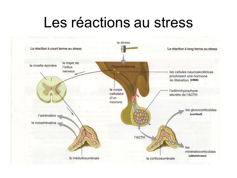 Les réactions au stress