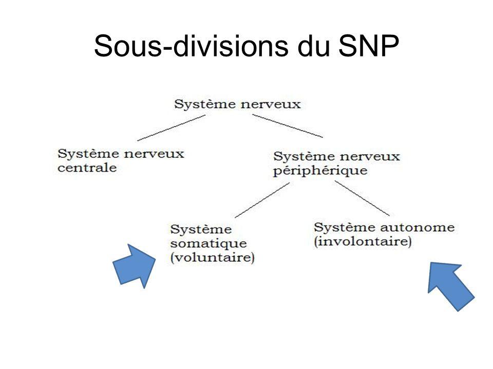Sous-divisions du SNP