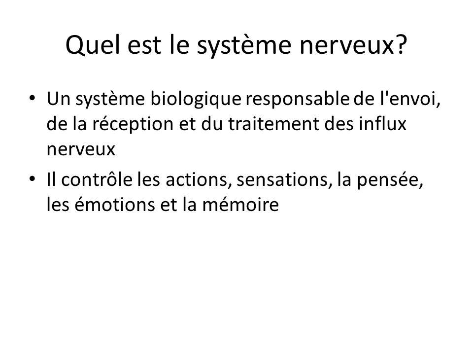 Quel est le système nerveux? Un système biologique responsable de l'envoi, de la réception et du traitement des influx nerveux Il contrôle les actions