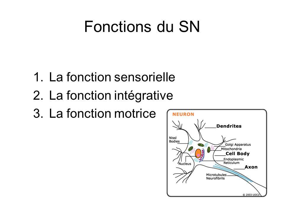 Fonctions du SN 1.La fonction sensorielle 2.La fonction intégrative 3.La fonction motrice
