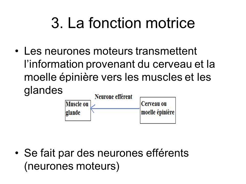 3. La fonction motrice Les neurones moteurs transmettent linformation provenant du cerveau et la moelle épinière vers les muscles et les glandes Se fa