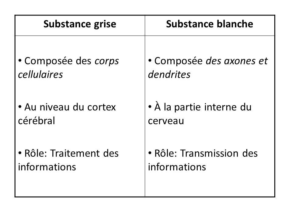 Substance griseSubstance blanche Composée des corps cellulaires Au niveau du cortex cérébral Rôle: Traitement des informations Composée des axones et
