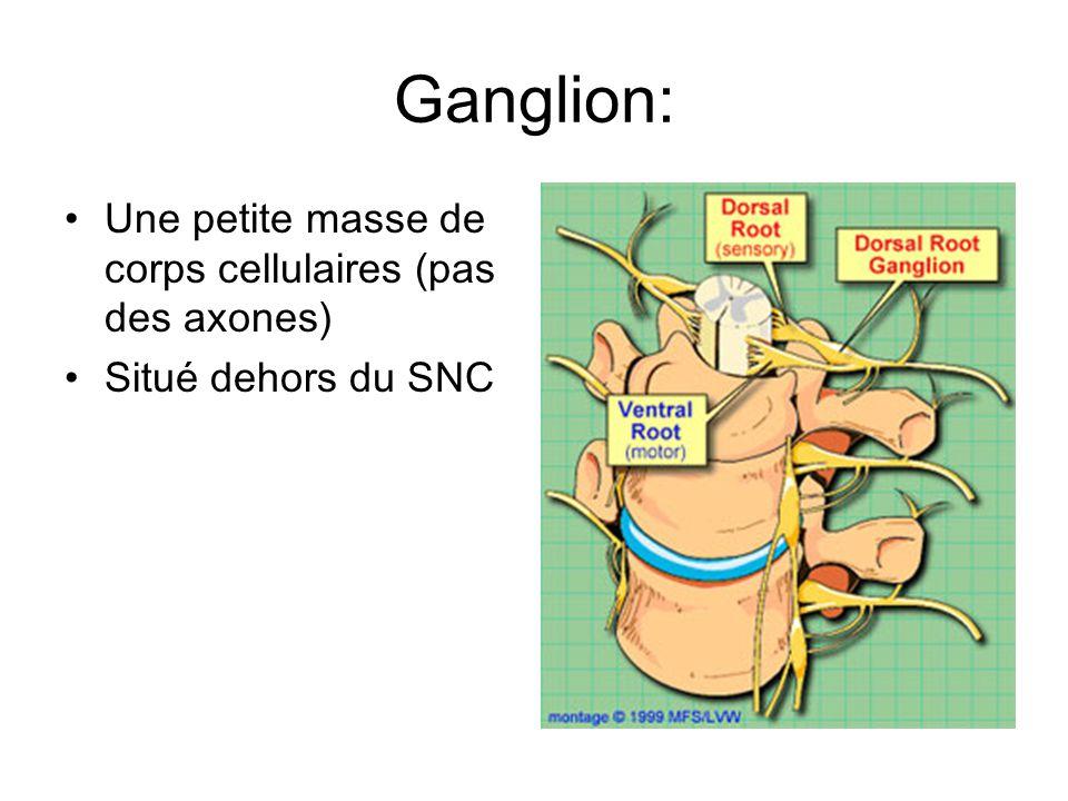 Ganglion: Une petite masse de corps cellulaires (pas des axones) Situé dehors du SNC