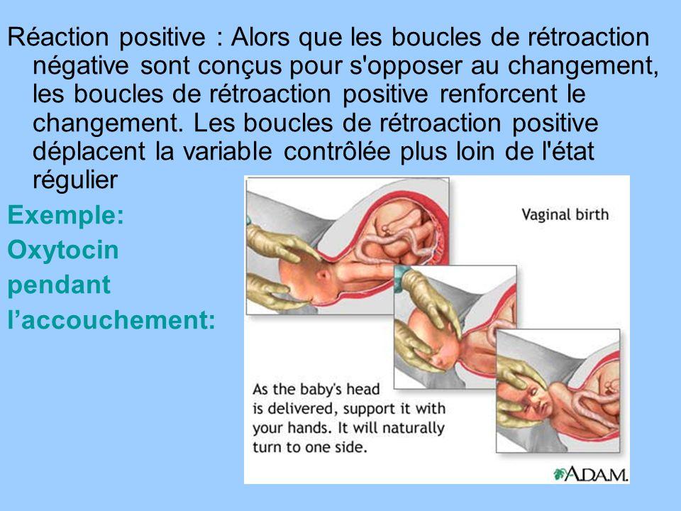 Réaction positive : Alors que les boucles de rétroaction négative sont conçus pour s'opposer au changement, les boucles de rétroaction positive renfor