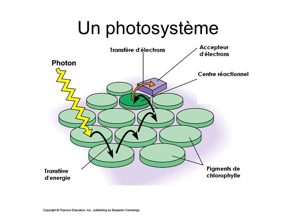 Un photosystème