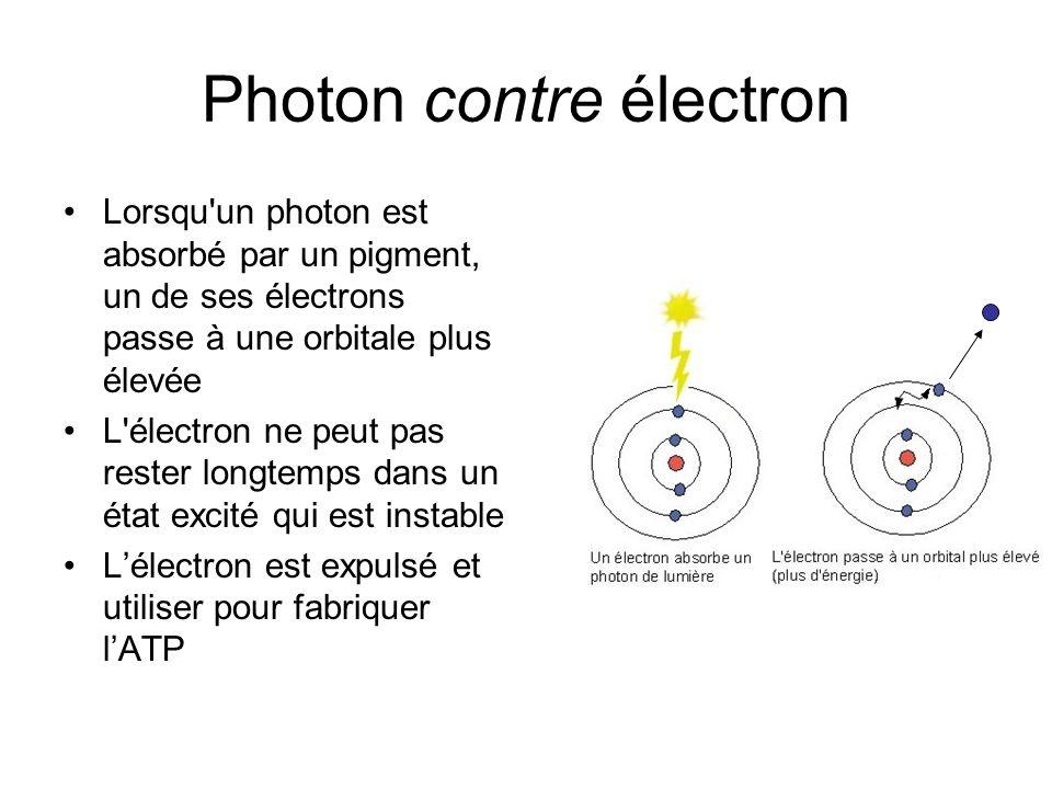 Photon contre électron Lorsqu un photon est absorbé par un pigment, un de ses électrons passe à une orbitale plus élevée L électron ne peut pas rester longtemps dans un état excité qui est instable Lélectron est expulsé et utiliser pour fabriquer lATP