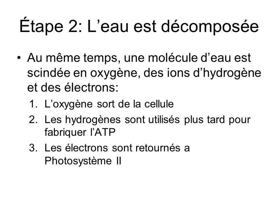 Étape 2: Leau est décomposée Au même temps, une molécule deau est scindée en oxygène, des ions dhydrogène et des électrons: 1.Loxygène sort de la cell