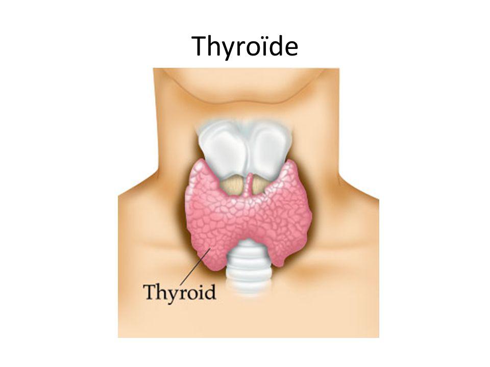 Glande entre le larynx et la trachée A une forme dune papillon Contient 4 petites sous- glandes sappellent les parathyroïdes