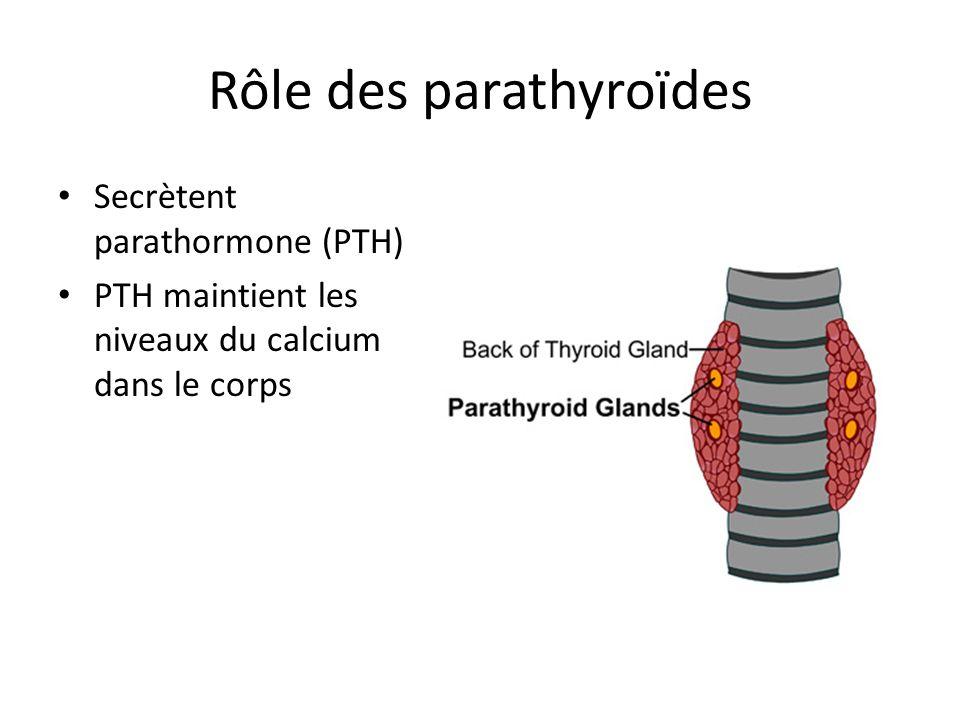 Rôle des parathyroïdes Secrètent parathormone (PTH) PTH maintient les niveaux du calcium dans le corps