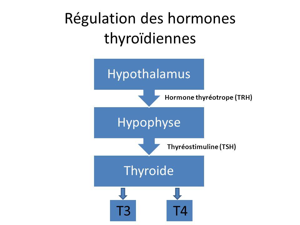 Une augmentation de T3 ou T4 dans le sang indique au hypothalamus darrêter la production de TRH Une diminution de T3 ou T4 dans le sang indique au hypothalamus de continuer la production de TRH Une boucle de rétroaction:
