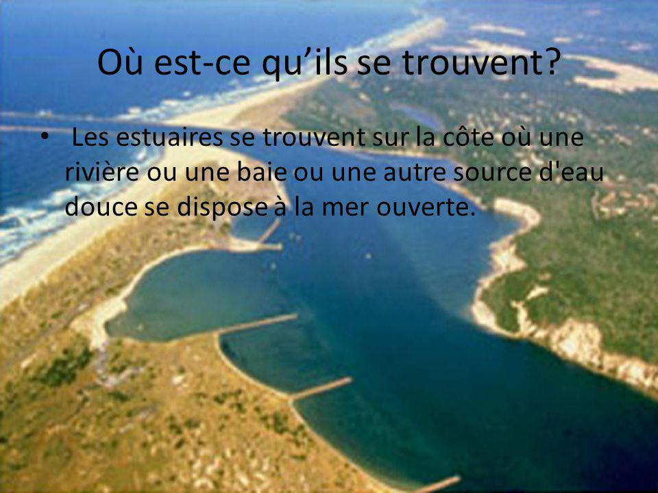Biseau sallé Les estuaires Biseau est quand leau fraîche de la bouche dune rivière/fleuve circule directement dans leau sallée.