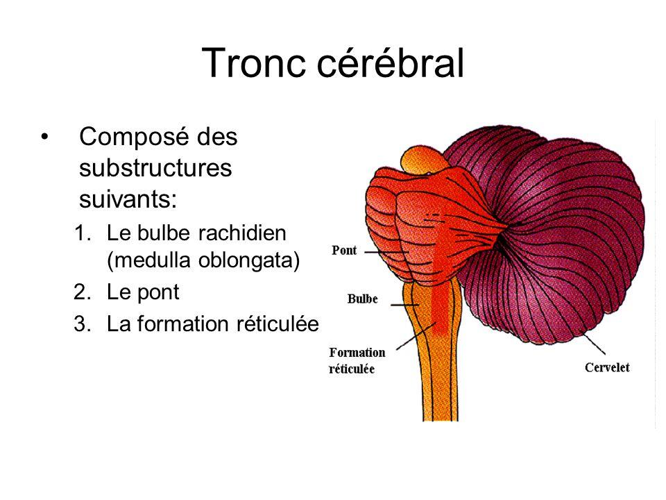 Tronc cérébral Composé des substructures suivants: 1.Le bulbe rachidien (medulla oblongata) 2.Le pont 3.La formation réticulée