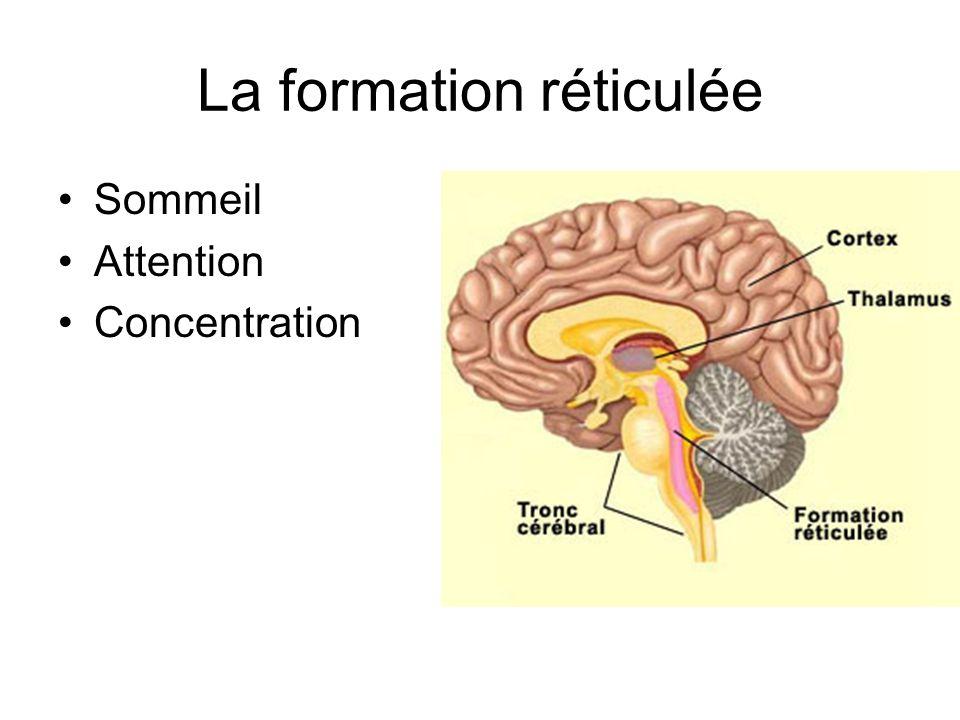 La formation réticulée Sommeil Attention Concentration