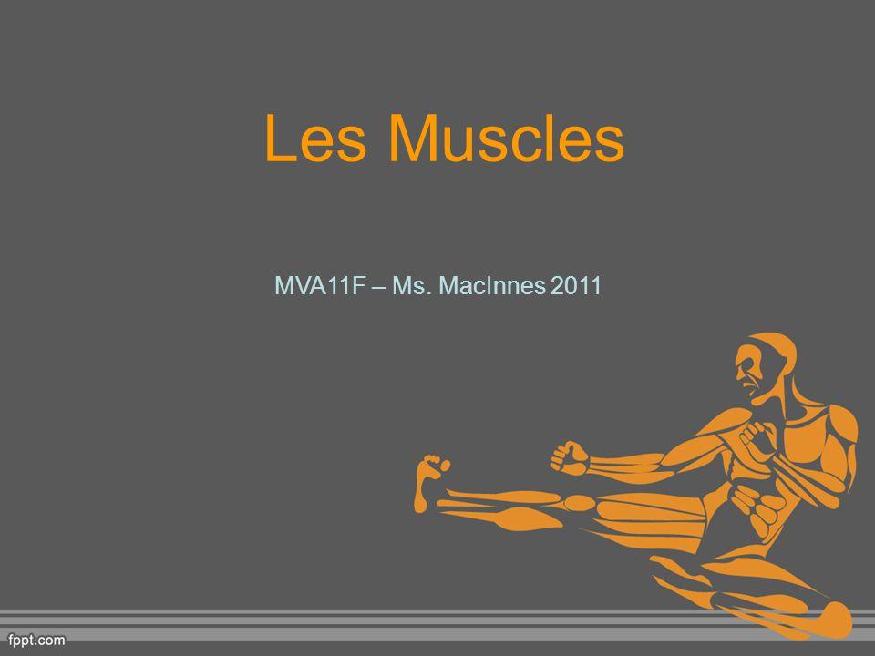 Les Muscles MVA11F – Ms. MacInnes 2011