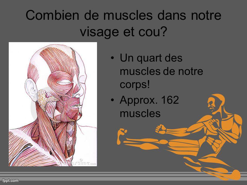 Combien de muscles dans notre visage et cou? Un quart des muscles de notre corps! Approx. 162 muscles