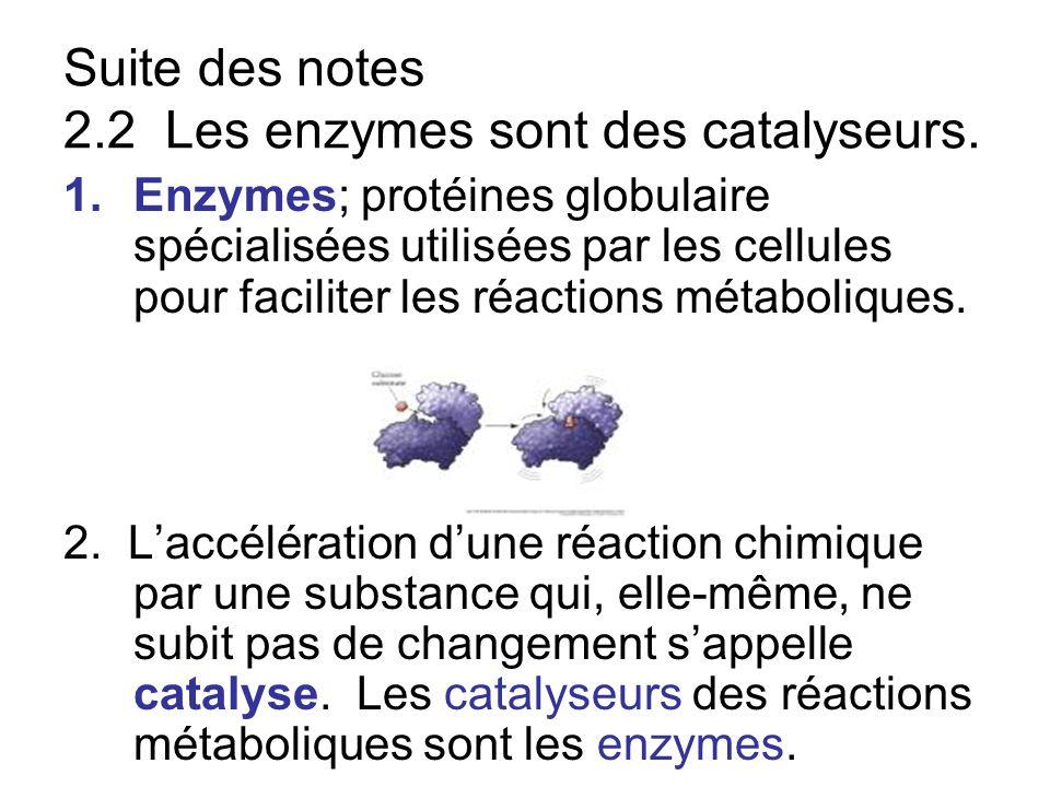 Suite des notes 2.2 Les enzymes sont des catalyseurs. 1.Enzymes; protéines globulaire spécialisées utilisées par les cellules pour faciliter les réact