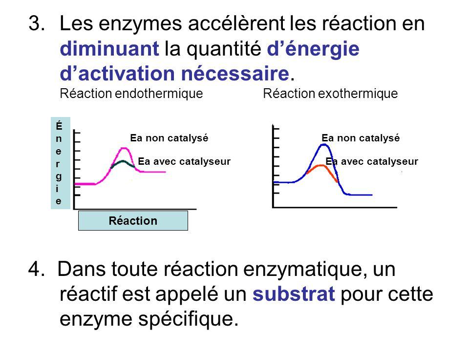 3.Les enzymes accélèrent les réaction en diminuant la quantité dénergie dactivation nécessaire. Réaction endothermique Réaction exothermique 4. Dans t