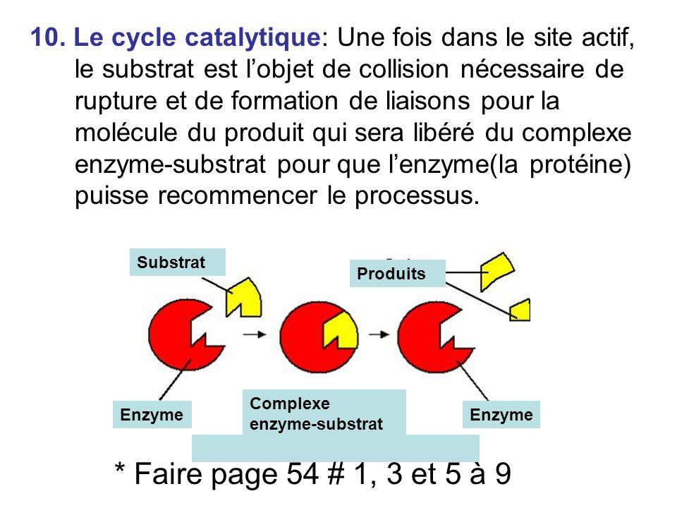 10. Le cycle catalytique: Une fois dans le site actif, le substrat est lobjet de collision nécessaire de rupture et de formation de liaisons pour la m