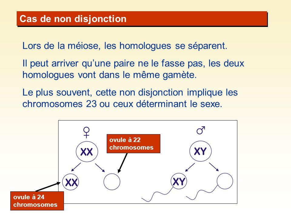 Cas de non disjonction Lors de la méiose, les homologues se séparent. Il peut arriver quune paire ne le fasse pas, les deux homologues vont dans le mê