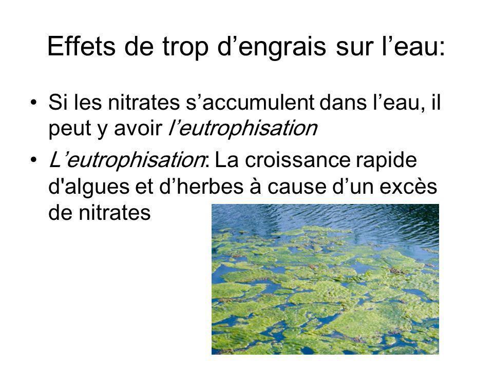 Effets de trop dengrais sur leau: Si les nitrates saccumulent dans leau, il peut y avoir leutrophisation Leutrophisation: La croissance rapide d algues et dherbes à cause dun excès de nitrates