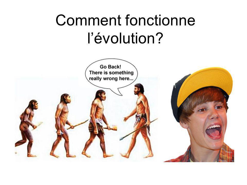Comment fonctionne lévolution?
