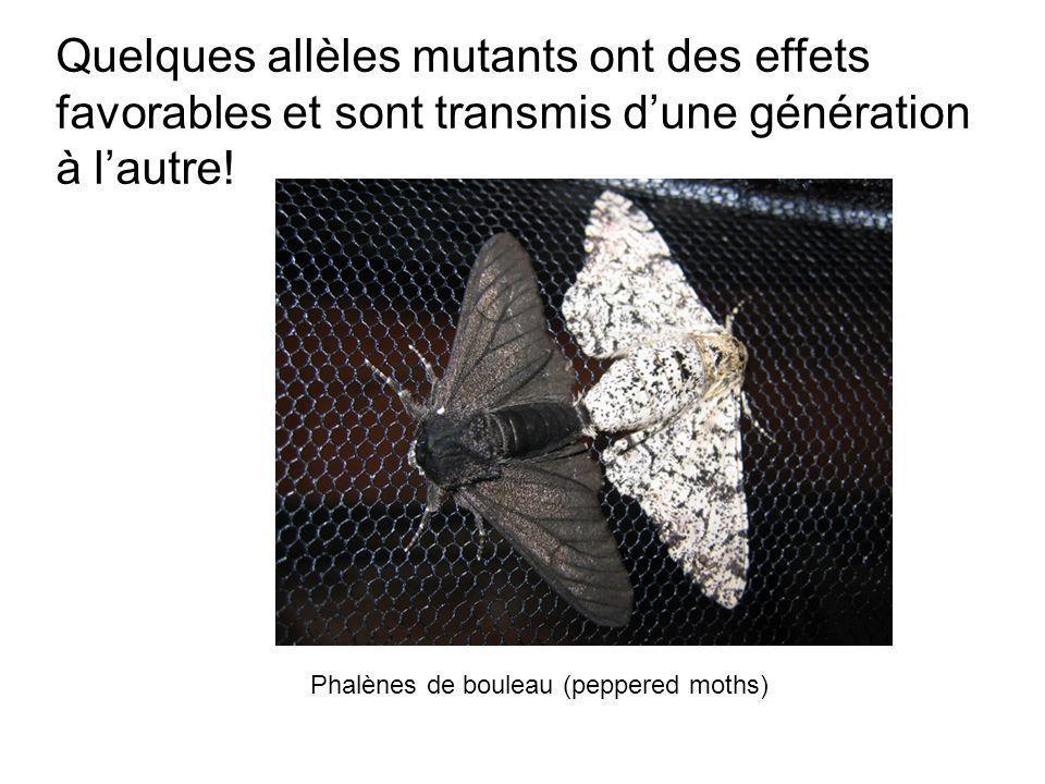 Quelques allèles mutants ont des effets favorables et sont transmis dune génération à lautre.