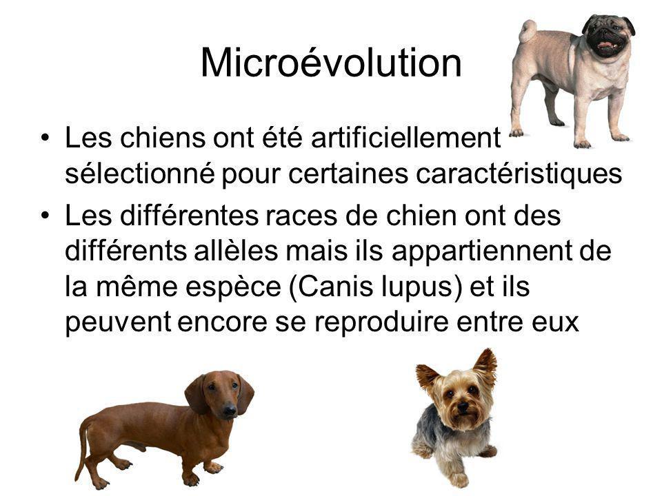 Microévolution Les chiens ont été artificiellement sélectionné pour certaines caractéristiques Les différentes races de chien ont des différents allèles mais ils appartiennent de la même espèce (Canis lupus) et ils peuvent encore se reproduire entre eux