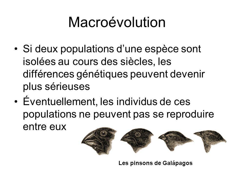 Macroévolution Si deux populations dune espèce sont isolées au cours des siècles, les différences génétiques peuvent devenir plus sérieuses Éventuellement, les individus de ces populations ne peuvent pas se reproduire entre eux Les pinsons de Galápagos