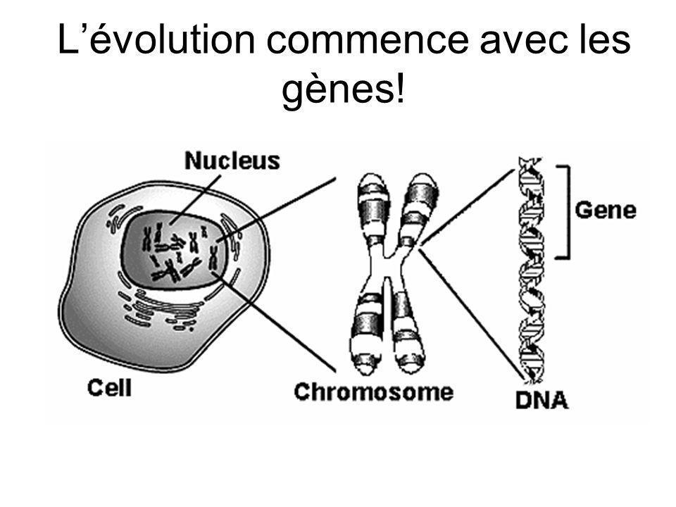 Lévolution commence avec les gènes!