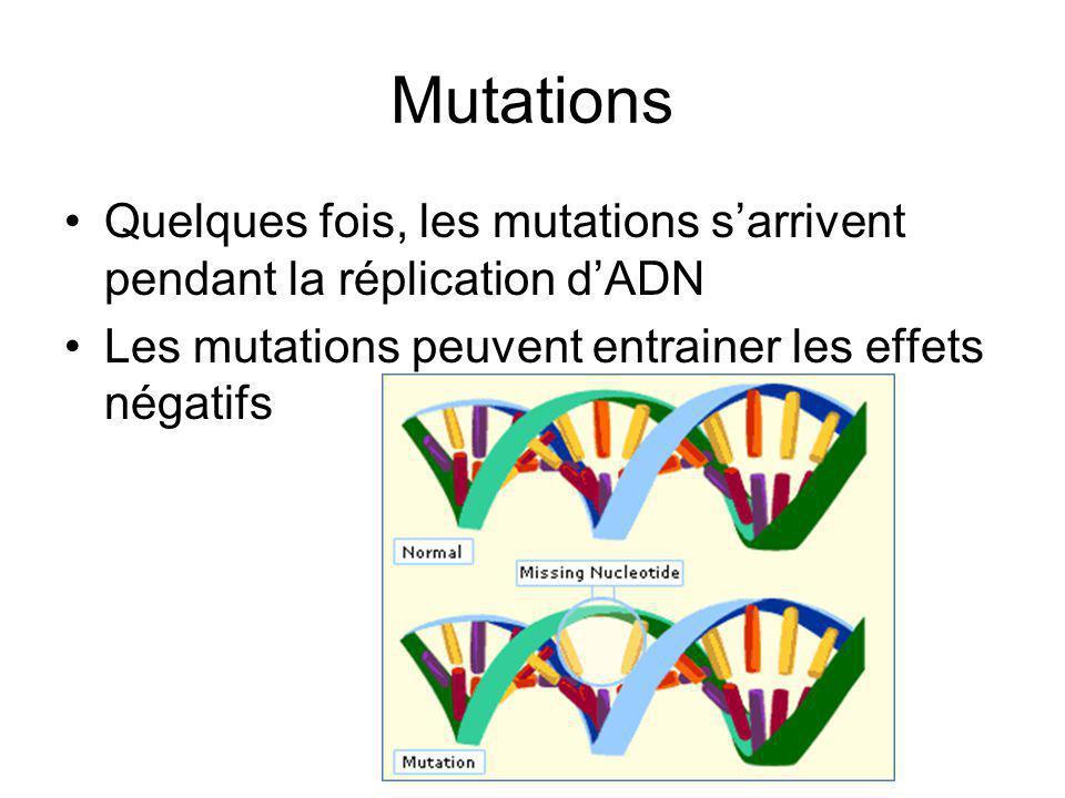 Mutations Quelques fois, les mutations sarrivent pendant la réplication dADN Les mutations peuvent entrainer les effets négatifs